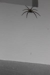Mes excuses aux arachnophobes!