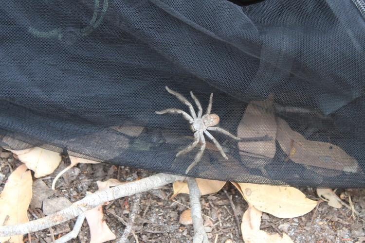 Dans la série faune, je demande l'araignée!
