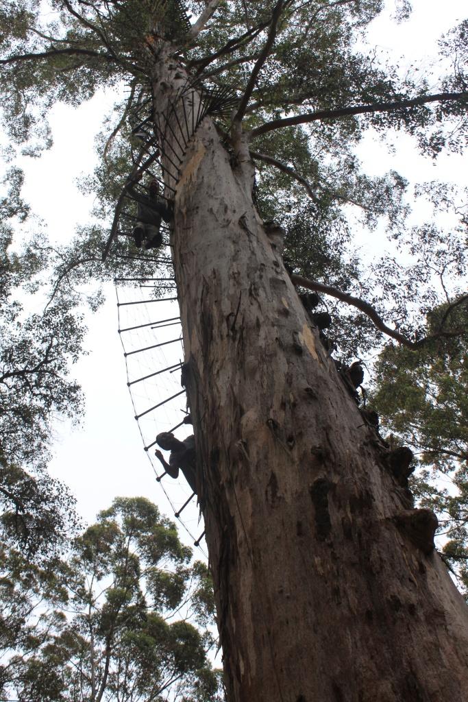 Gianluca et Jason, sur l'arbre de la torture
