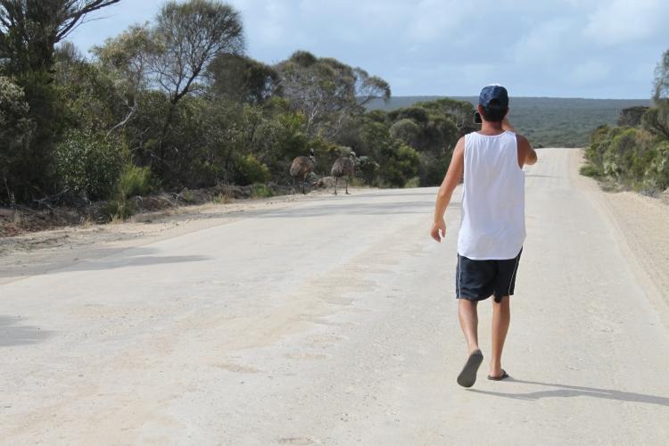 Des emus! Manquant à la liste de la faune typique australienne!